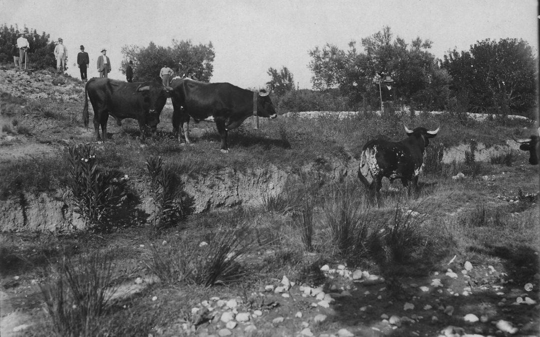 Toros en la Canaleja. Archivo M. Mora