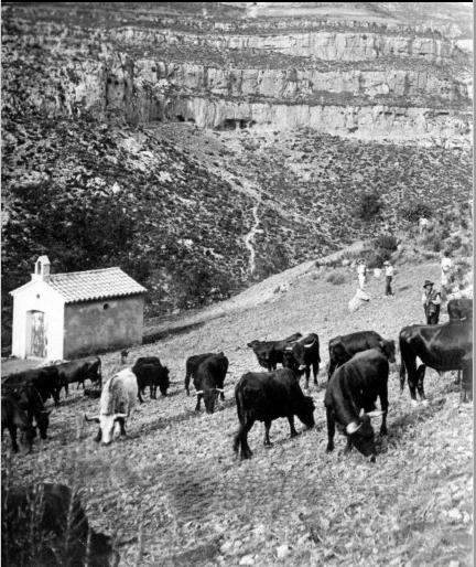 Toros en la Landiga. Archivo M. Mora