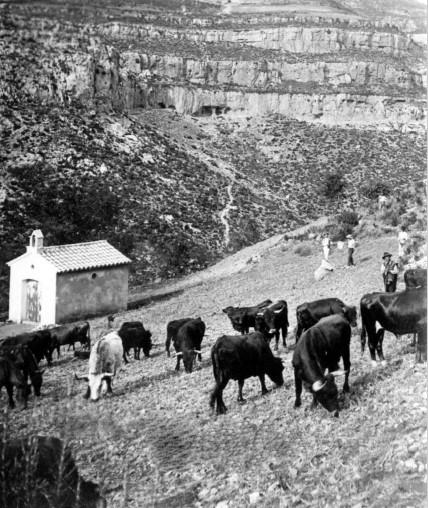 1. Toros en la Landiga. Archivo de Luis Fenech. Aproximadamente de 1921.