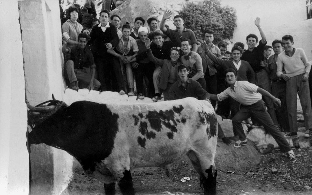 Torico en Pascua. Foto Vicente Burriel.