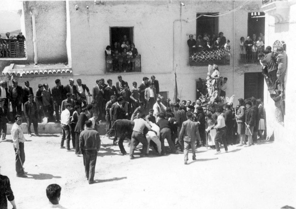 Fotografía del Toro de San Marcos en Ohanes. Web de la Federación Española de Toro  con cuerda.
